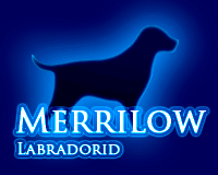 kennel Merrilow