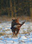 Arnac Bay Gull in Merrilow
